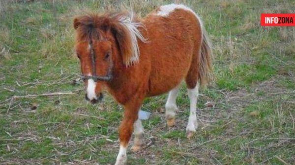 Pony azul