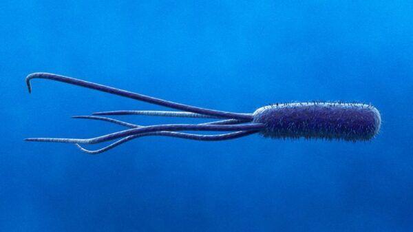 Salmonella-Escherichia-Coli